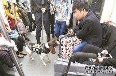 """广州警方全国首创""""警犬上地铁列车安检"""