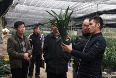 广州市审计局持续巩固提升精准脱贫成果