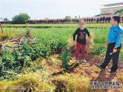 农妇在家种罂粟''止咳'' 警方:超500株可判