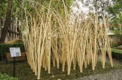 """北林举办国际花园建造节,学生造竹木"""""""